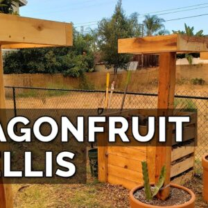How to Build a Dragon Fruit Trellis and Plant Your First Dragon Fruit Cutting