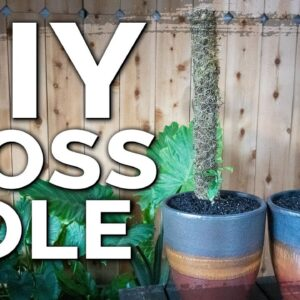 Build an Easy DIY Moss Pole for Climbing Indoor Houseplants!