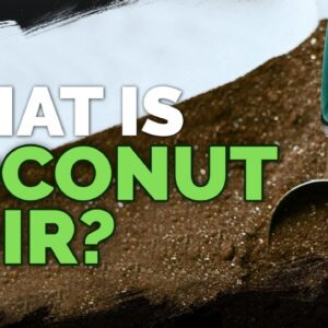 Coconut Coir: What it is and How To Use It In The Garden