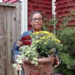 Como Plantar Crisantemos