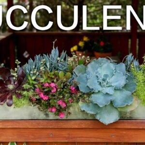 Decorate Your Outdoor Space with Succulents!