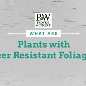 Deer Resistant Foliage - Remember these 3 Fs