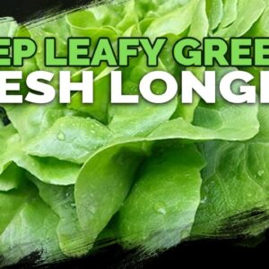 Double The Shelf Life Of Your Leafy Greens in 3 Steps