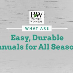 Easy, Durable Annuals for All Season