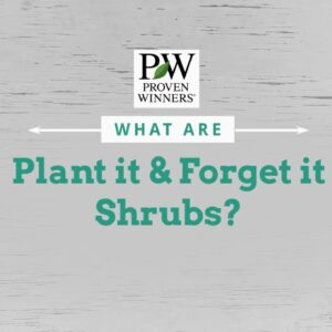 Easy Plant it and Forget it Shrubs