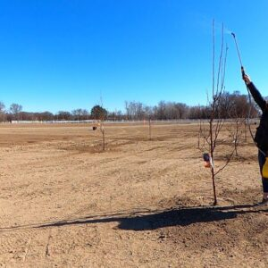 Spraying our Fruit Trees: Dormant Oil/Liquid Cooper for Overwintering Insects & Disease! 🌳🍎👩🌾