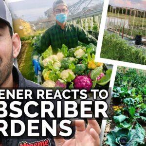 Gardener Reacts to Subscriber Gardens! 👀🌱🌿