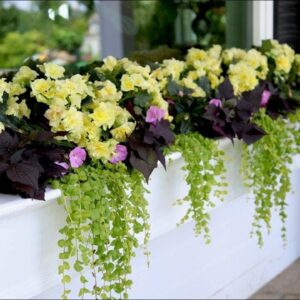Enjoy Your Flowers from the Inside with a Window Box!