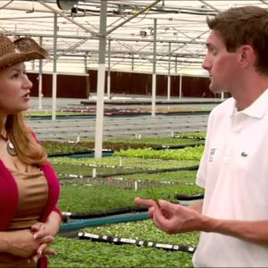 Proven Winners® Gardener Channel: Proven Winners® How Proven Winners Plants Are Bred
