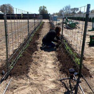 Planting Sweet Peas & Fertilizing the Lawn! 🌸🌿🌾 // Garden Answer