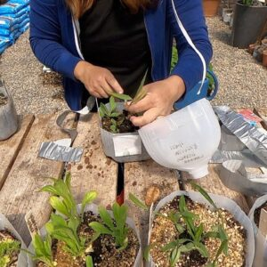 Successes & Failures of Winter Sowing and Overwintering Bulbs in Containers! 👍🌿// Garden Answer