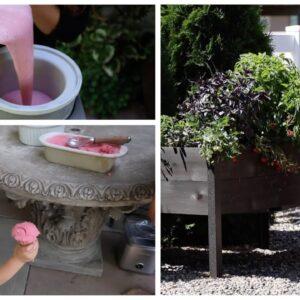 Harvesting Strawberries & Making Ice Cream! 🍓🤤🍦// Garden Answer