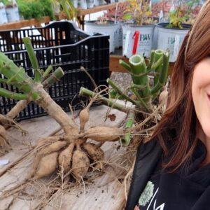 How I'm Digging & Storing Our Dahlias! 🌸👩🌾🌿// Garden Answer
