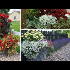 Favorite Plants for Container Gardens