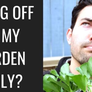 Surviving off of Gardening, Foraging, & Fishing for a Month: APOCALYPSE GROW CHALLENGE!