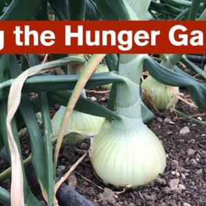 Filling the Hunger Gap