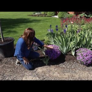 Planting Creeping Phlox (that's in Full Glorious Bloom)! 🌸😍🌿// Garden Answer