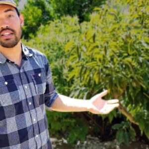 """Garden Tour: Unveiling The """"California Garden"""" Once And For All!"""