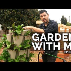 Garden With Me: Watering, Transplanting, Multi-Sowing, & Dragon Fruit