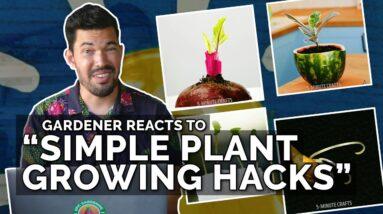 "Gardener Reacts to ""Simple Plant Growing Hacks"""