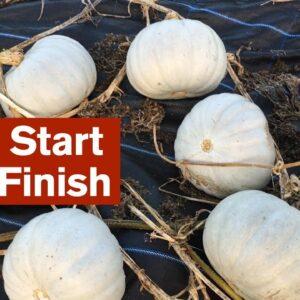 Good Start - Poor Finish