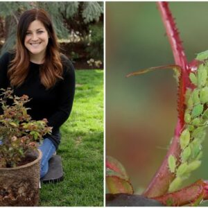 How to Control Aphids! 🙅�♀�🌿// Garden Answer