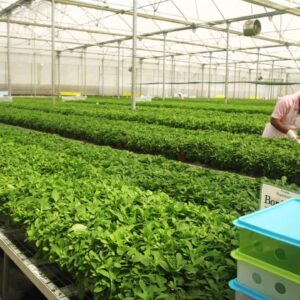 How a Proven Winners Plant Makes The Trip to the Garden Center Shelf