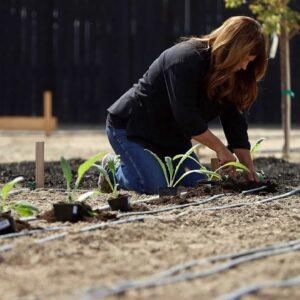 How I Grow Artichokes! 🌿💚 // Garden Answer