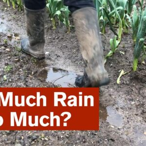 How Much Rain Is Too Much?
