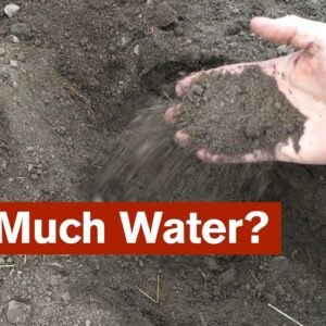 How Much Water Is Enough?
