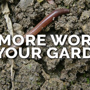 How to Attract More Earthworms To Your Garden (& Why They Matter)