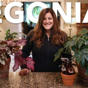How To Baby Those Begonias--Indoors!