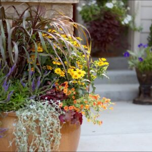 How to Create a Beautiful Fall Container Garden with Proven Winners
