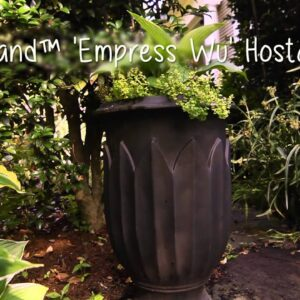 How To Create A Beautiful Shade Garden with P Allen Smith