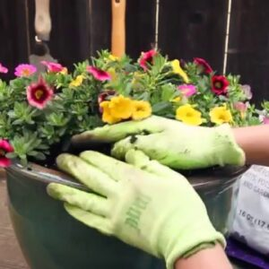 How-To Create A Simple Container Garden
