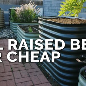 How to Fill a Raised Bed and Save 60%+ on Soil Costs