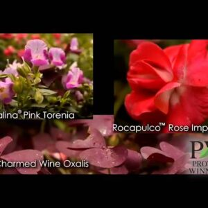 How-to Glam Up Your Garden With P Allen Smith
