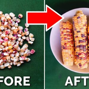 How to Grow EPIC Corn From Seed to Harvest (COMPLETE GUIDE) 🌽