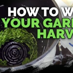 How to Harvest, Wash, and Dry Your Greens Quickly