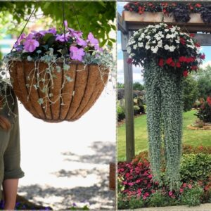 How To Make a Jellyfish Plant Container!