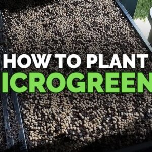 How to Plant Microgreens (And What Soil to Use)