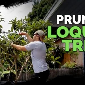 How to Prune a Loquat Tree + Fall 2018 Garden Plans 🌴