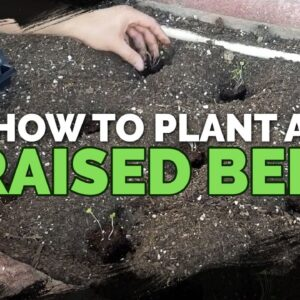 How to Start Seeds, Transplant, and Fertilize a Raised Bed