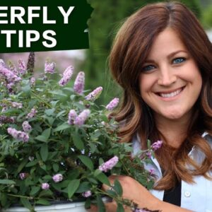 How to Succeed with Butterfly Bushes in Your Garden