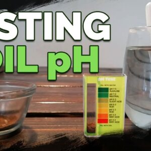 How to Test and Measure Your Soil pH at Home