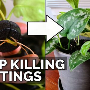 How to Transplant Water-Rooted Cuttings Without Killing Them (Foolproof)