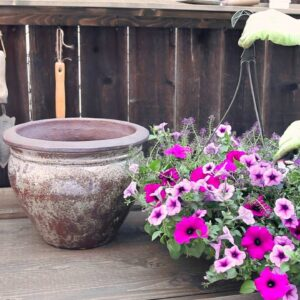 How-to Turn A Hanging Basket Into a Container Garden
