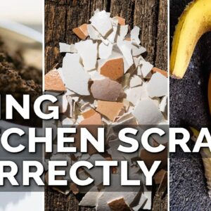 How to Use Eggshells, Banana Peels, and Coffee Grounds in the Garden