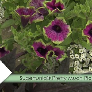 How-To Use Supertunias with P. Allen Smith