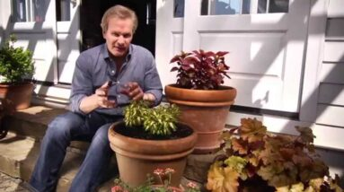 How-To Water Your Plants With Waterwise® & P. Allen Smith